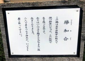 熊野神社 御神木