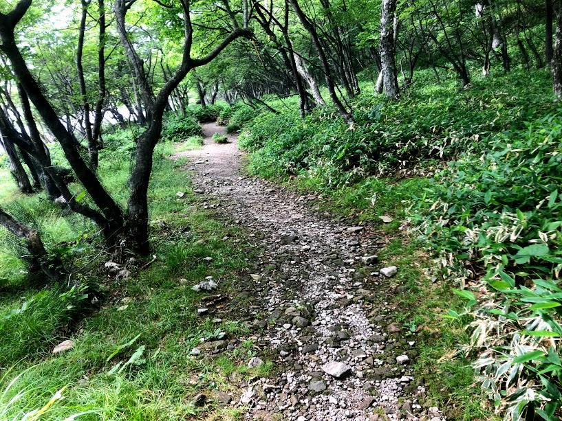 赤城山 小沼周遊歩道
