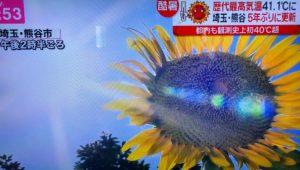 熊谷 猛暑