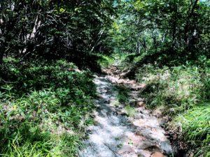 赤城山 オトギの森
