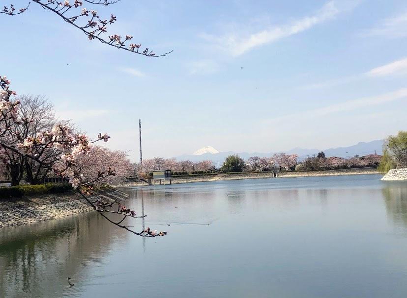 波志江沼 桜 浅間山