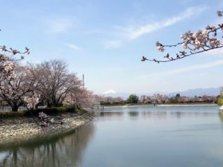 波志江沼環境ふれあい公園 浅間山 桜