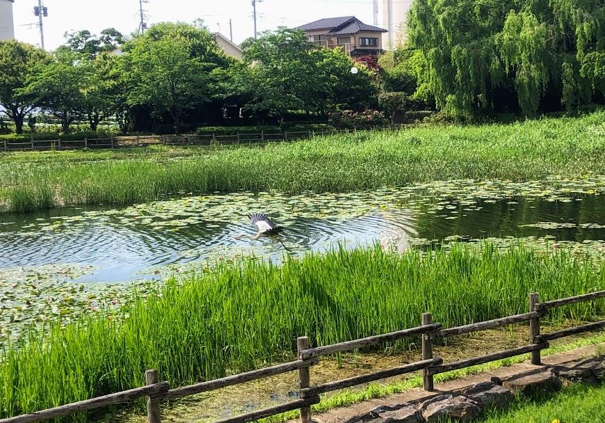 波志江沼 野鳥観察