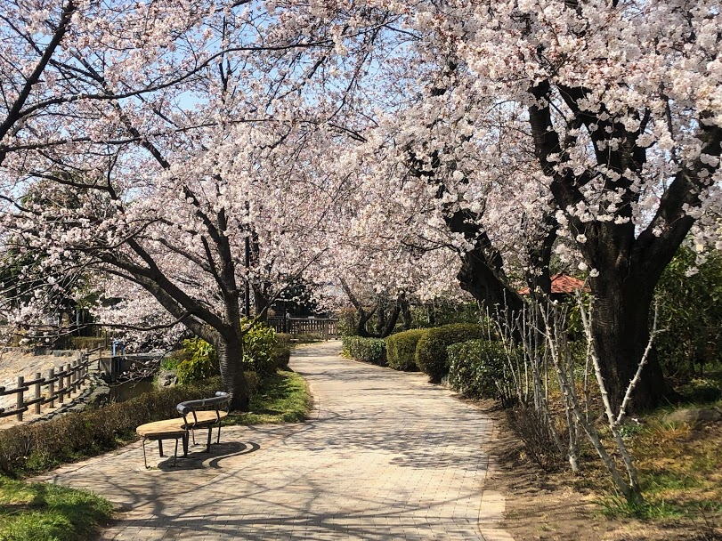 波志江沼 桜並木